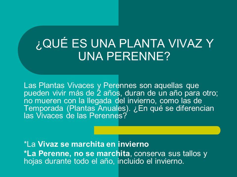 Plantas anuales y bianuales ppt video online descargar for Planta perenne en maceta de invierno