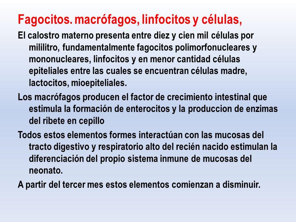 Fagocitos. macrófagos, linfocitos y células,