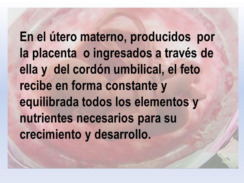 En el útero materno, producidos por la placenta o ingresados a través de ella y del cordón umbilical, el feto recibe en forma constante y equilibrada todos los elementos y nutrientes necesarios para su crecimiento y desarrollo.