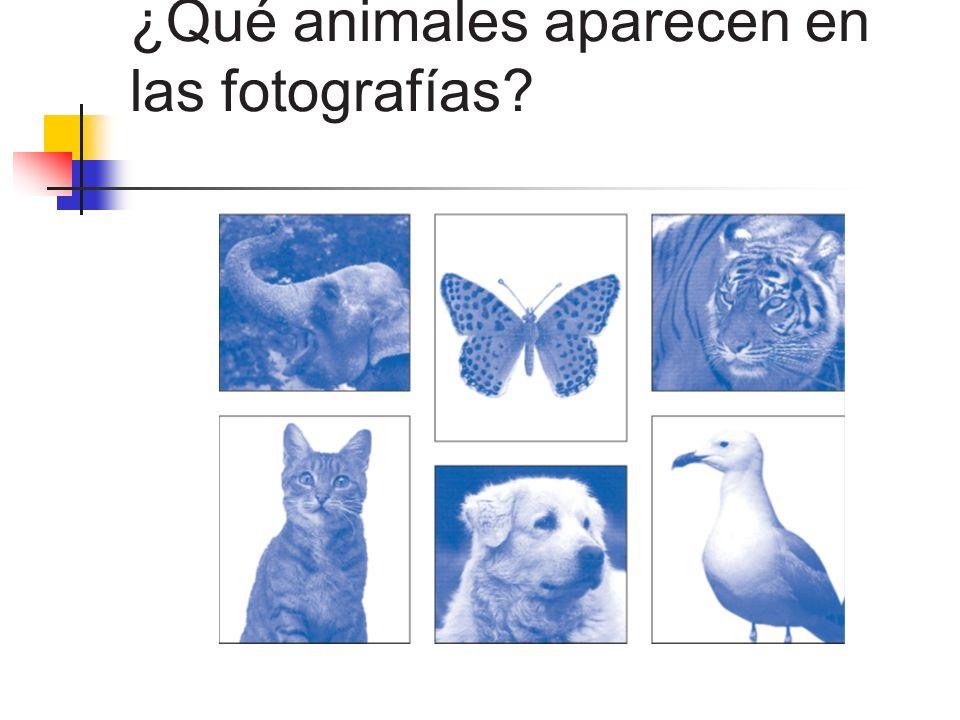 ¿Qué animales aparecen en las fotografías