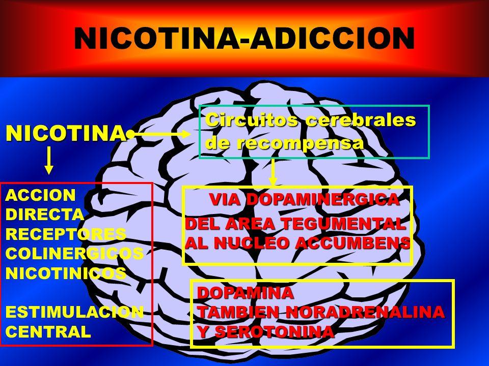 NICOTINA-ADICCION NICOTINA Circuitos cerebrales de recompensa ACCION