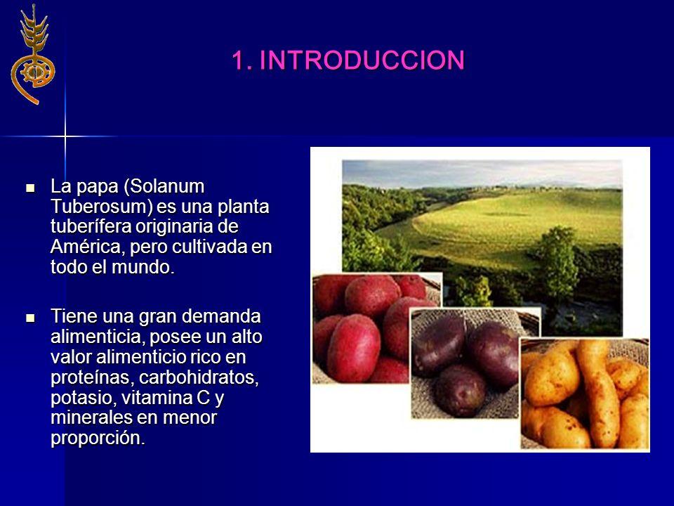 1. INTRODUCCIONLa papa (Solanum Tuberosum) es una planta tuberífera originaria de América, pero cultivada en todo el mundo.