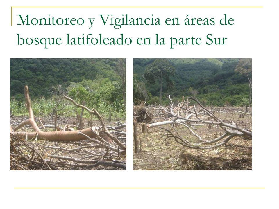 Monitoreo y Vigilancia en áreas de bosque latifoleado en la parte Sur