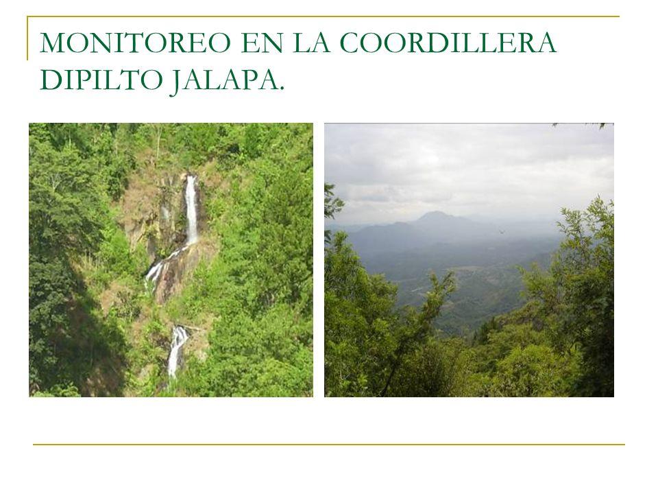 MONITOREO EN LA COORDILLERA DIPILTO JALAPA.