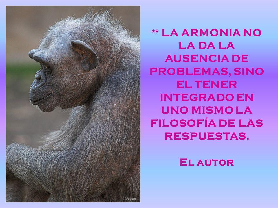 ** LA ARMONIA NO LA DA LA AUSENCIA DE PROBLEMAS, SINO EL TENER INTEGRADO EN UNO MISMO LA FILOSOFÍA DE LAS RESPUESTAS.