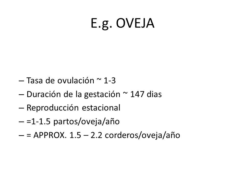 E.g. OVEJA Tasa de ovulación ~ 1-3 Duración de la gestación ~ 147 dias