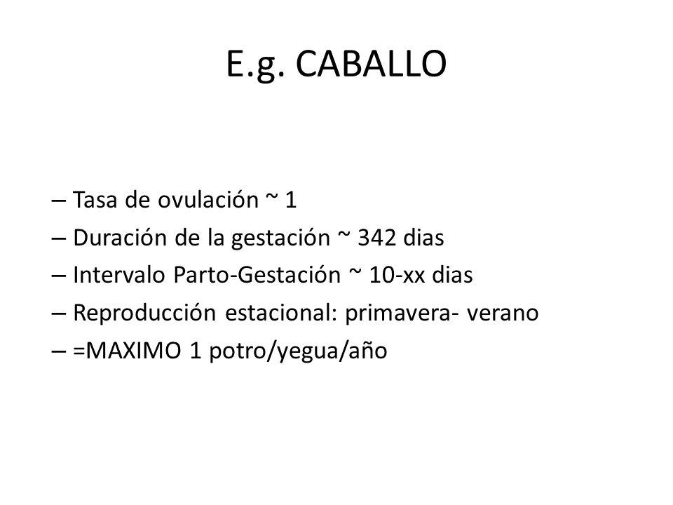 E.g. CABALLO Tasa de ovulación ~ 1 Duración de la gestación ~ 342 dias