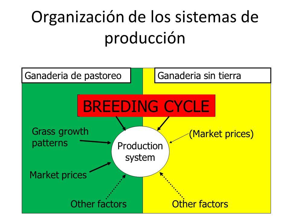 Organización de los sistemas de producción