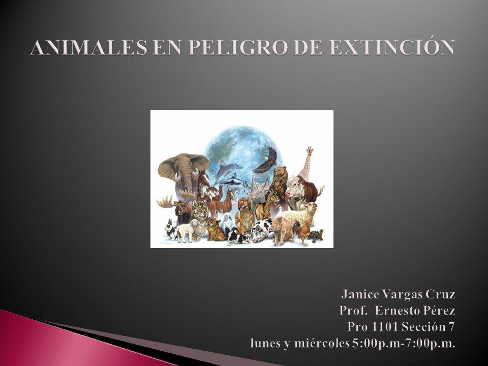 ANIMALES EN PELIGRO DE EXTINCIÓN ANIMALES EN PELIGRO DE EXTINCIÓN Janice Vargas Cruz Prof.