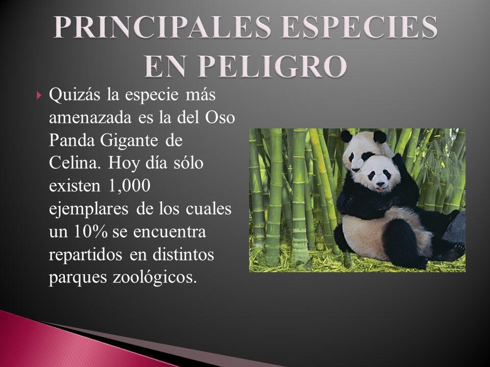 PRINCIPALES ESPECIES EN PELIGRO