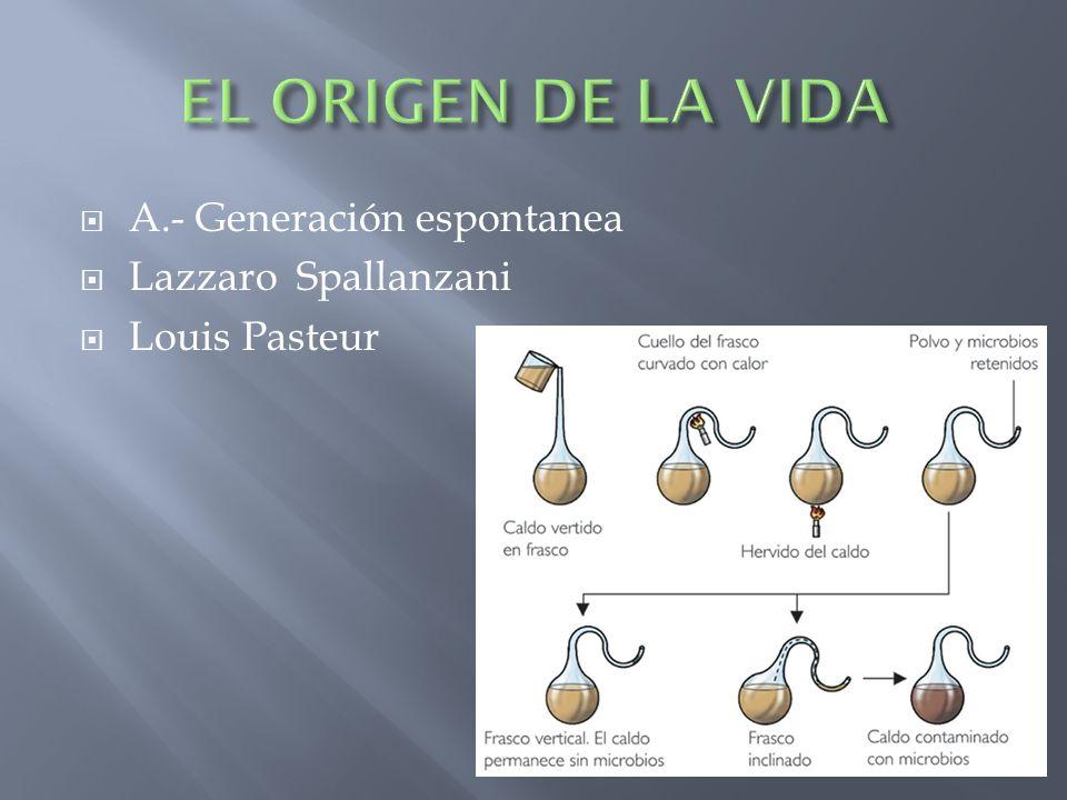 EL ORIGEN DE LA VIDA A.- Generación espontanea Lazzaro Spallanzani