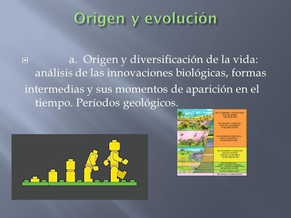Origen y evolución a. Origen y diversificación de la vida: análisis de las innovaciones biológicas, formas.