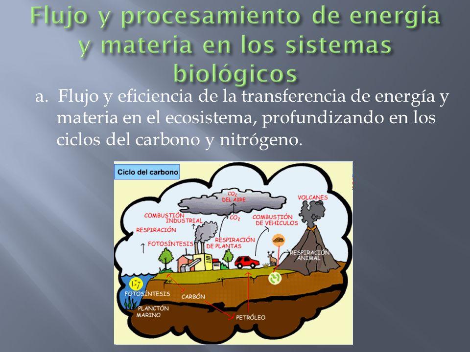 Flujo y procesamiento de energía y materia en los sistemas biológicos