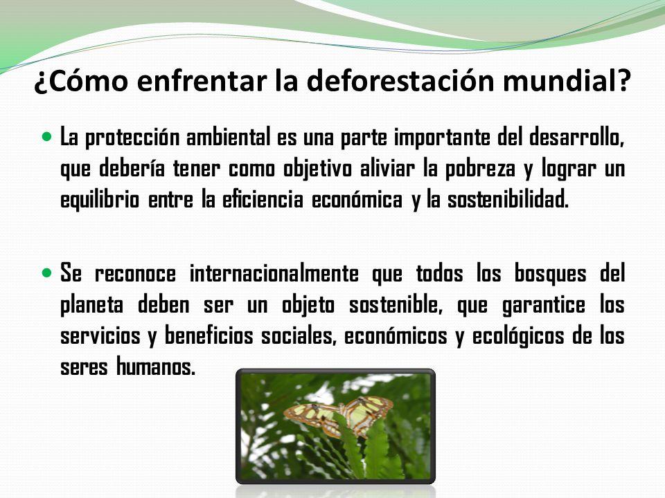¿Cómo enfrentar la deforestación mundial