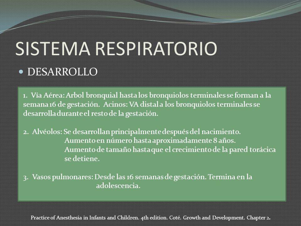 SISTEMA RESPIRATORIO DESARROLLO