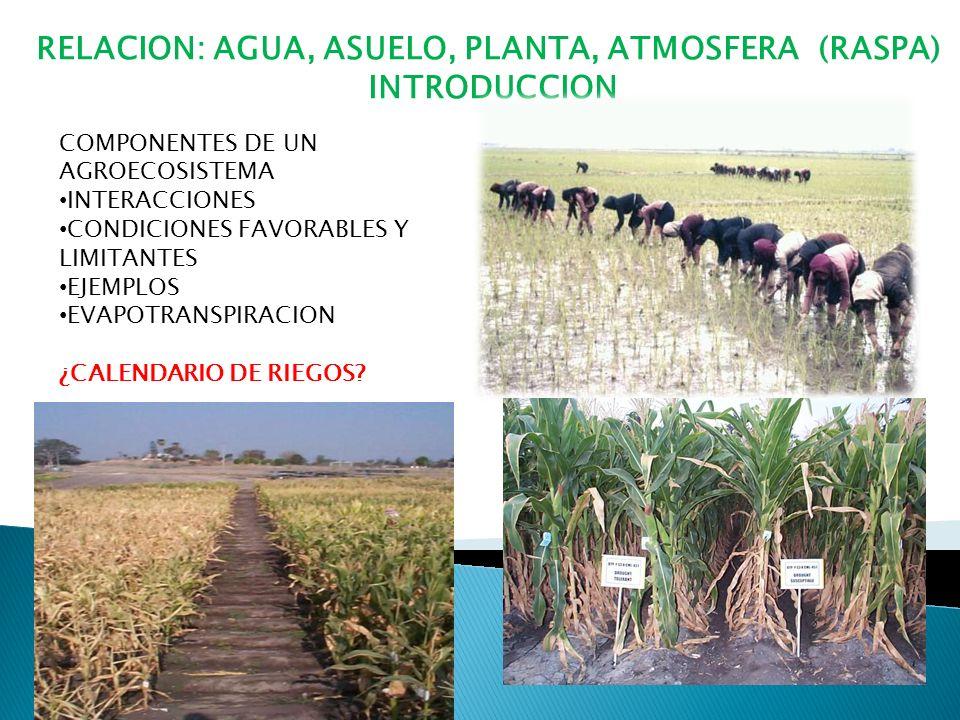 RELACION: AGUA, ASUELO, PLANTA, ATMOSFERA (RASPA) INTRODUCCION