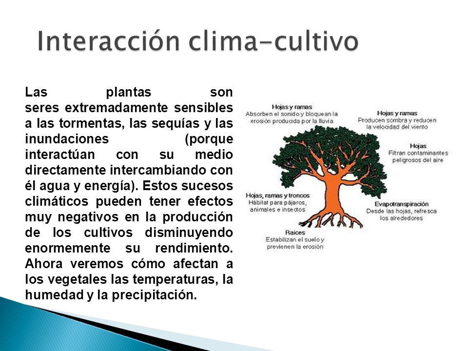 Interacción clima-cultivo