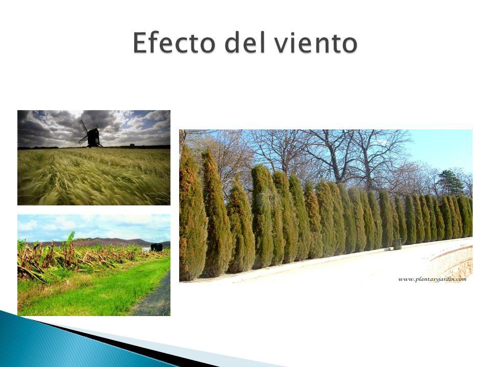 Efecto del viento