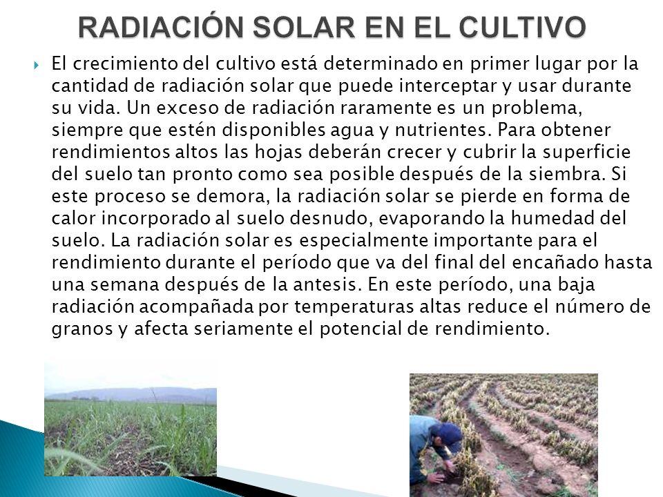 RADIACIÓN SOLAR EN EL CULTIVO