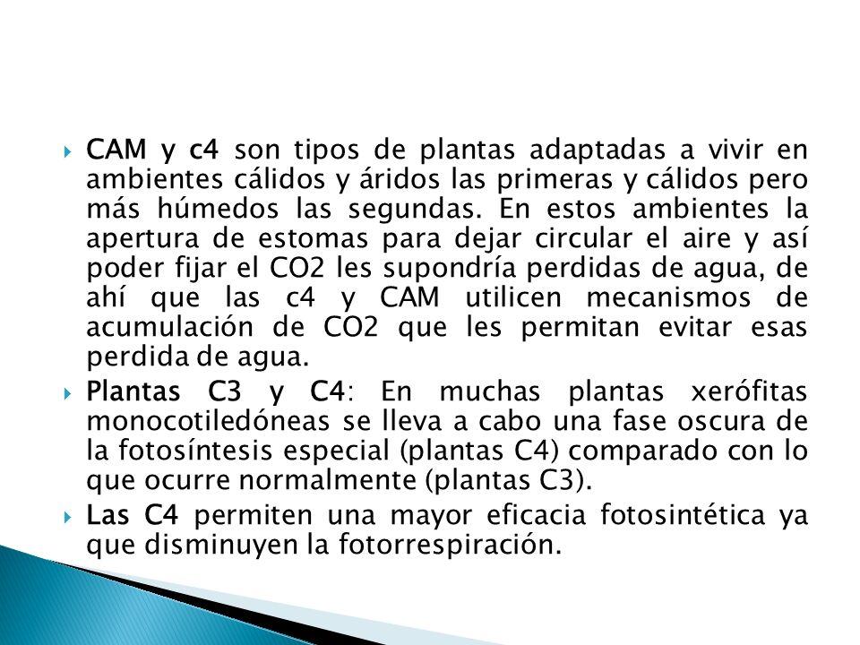CAM y c4 son tipos de plantas adaptadas a vivir en ambientes cálidos y áridos las primeras y cálidos pero más húmedos las segundas. En estos ambientes la apertura de estomas para dejar circular el aire y así poder fijar el CO2 les supondría perdidas de agua, de ahí que las c4 y CAM utilicen mecanismos de acumulación de CO2 que les permitan evitar esas perdida de agua.