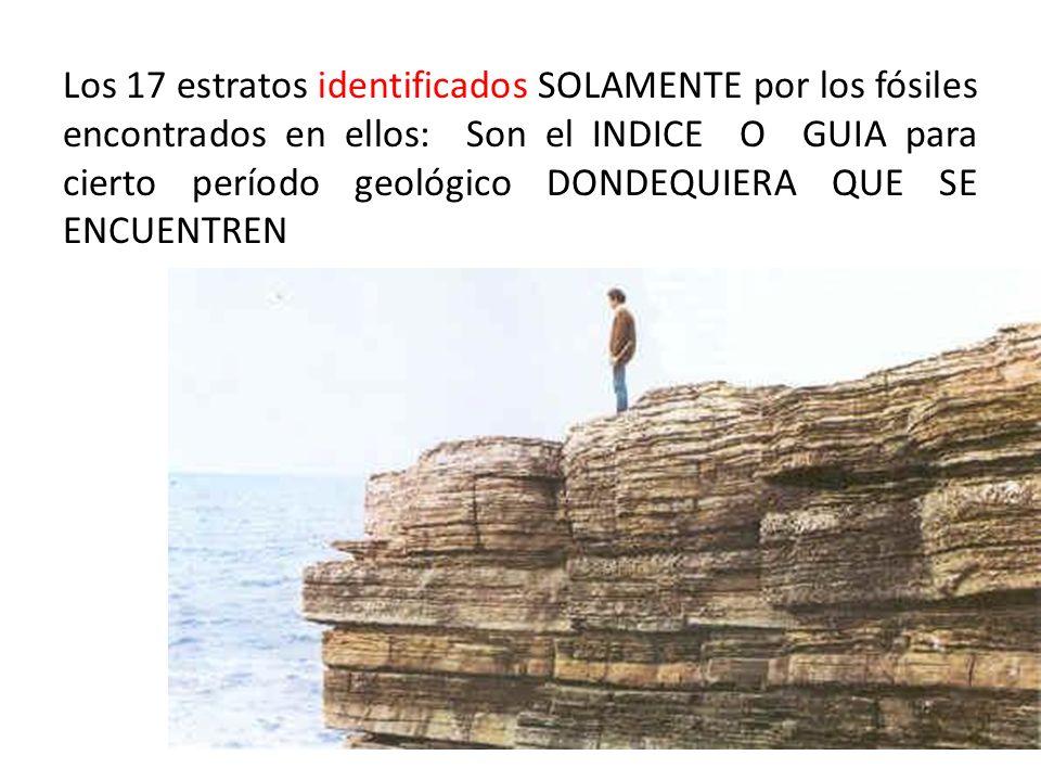Los 17 estratos identificados SOLAMENTE por los fósiles encontrados en ellos: Son el INDICE O GUIA para cierto período geológico DONDEQUIERA QUE SE ENCUENTREN