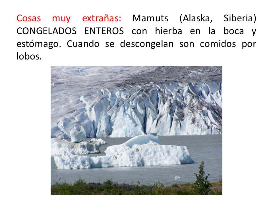 Cosas muy extrañas: Mamuts (Alaska, Siberia) CONGELADOS ENTEROS con hierba en la boca y estómago.