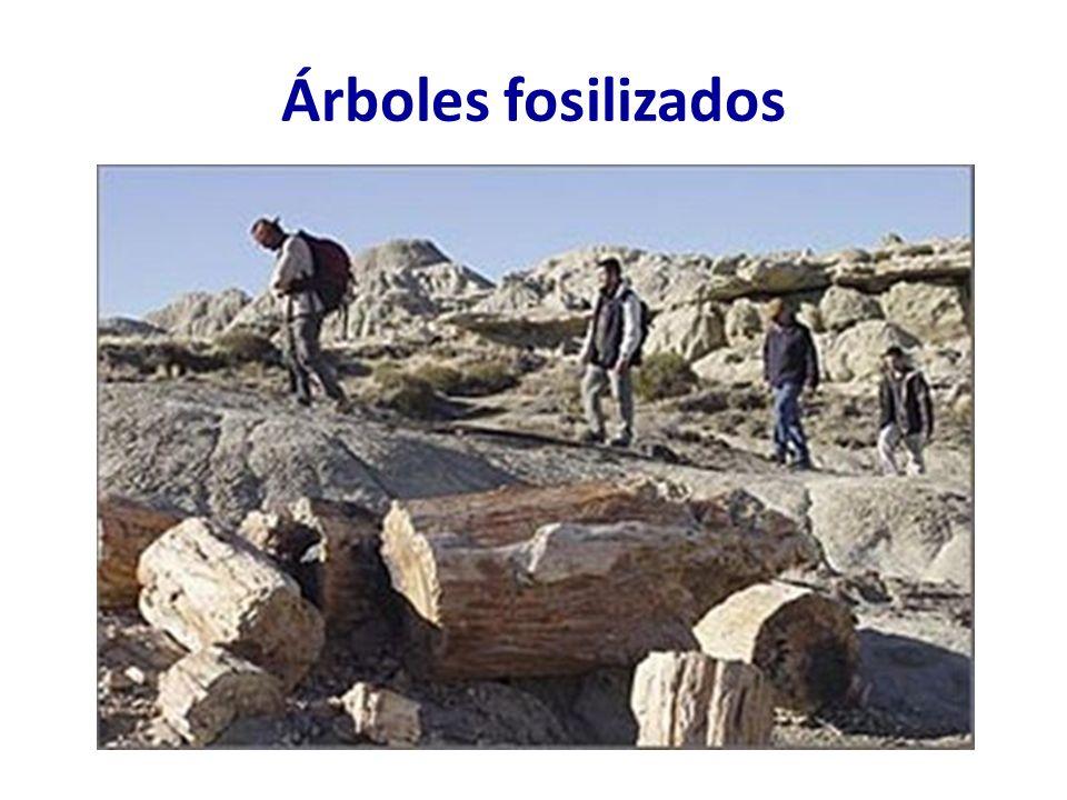 Árboles fosilizados