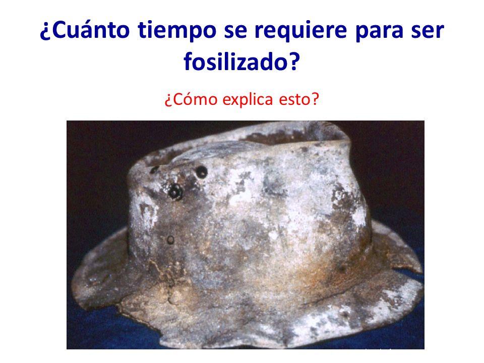 ¿Cuánto tiempo se requiere para ser fosilizado
