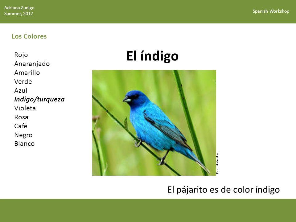 El índigo El pájarito es de color índigo Los Colores Rojo Anaranjado