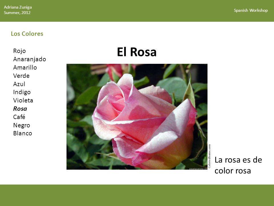 El Rosa La rosa es de color rosa Los Colores Rojo Anaranjado Amarillo