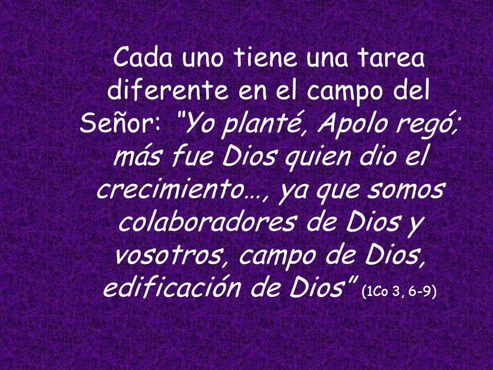 Cada uno tiene una tarea diferente en el campo del Señor: Yo planté, Apolo regó; más fue Dios quien dio el crecimiento…, ya que somos colaboradores de Dios y vosotros, campo de Dios, edificación de Dios (1Co 3, 6-9)