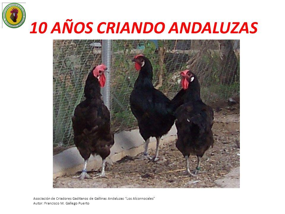 10 AÑOS CRIANDO ANDALUZAS