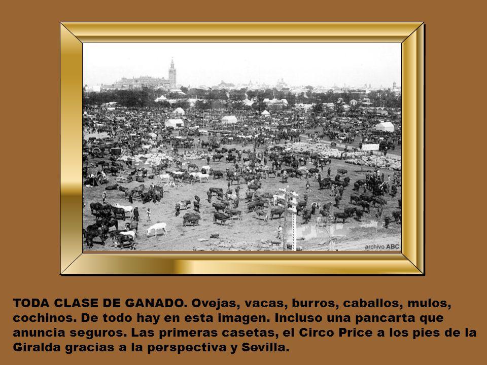 TODA CLASE DE GANADO. Ovejas, vacas, burros, caballos, mulos, cochinos