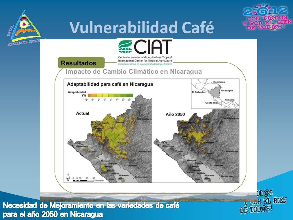 Vulnerabilidad Café Necesidad de Mejoramiento en las variedades de café para el año 2050 en Nicaragua.