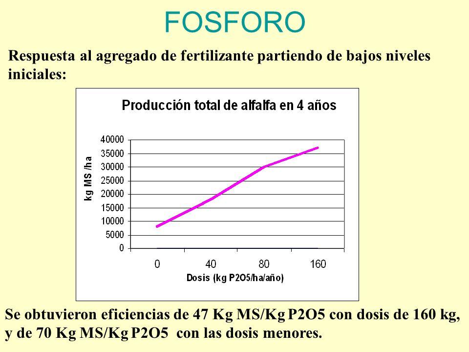 FOSFORO Respuesta al agregado de fertilizante partiendo de bajos niveles iniciales: