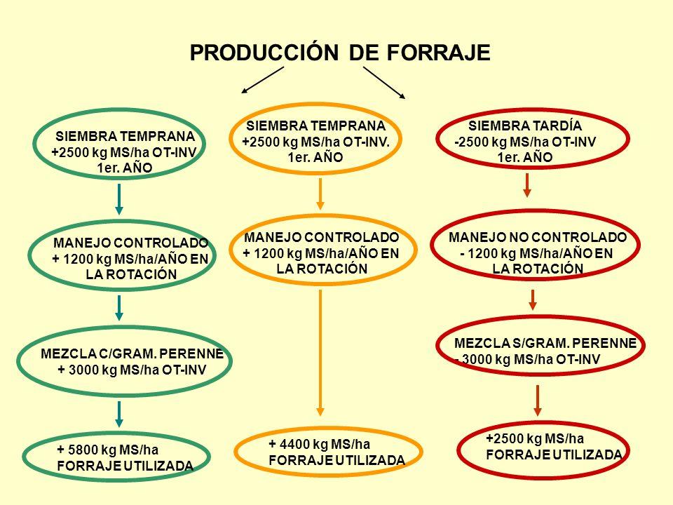 PRODUCCIÓN DE FORRAJE SIEMBRA TARDÍA -2500 kg MS/ha OT-INV