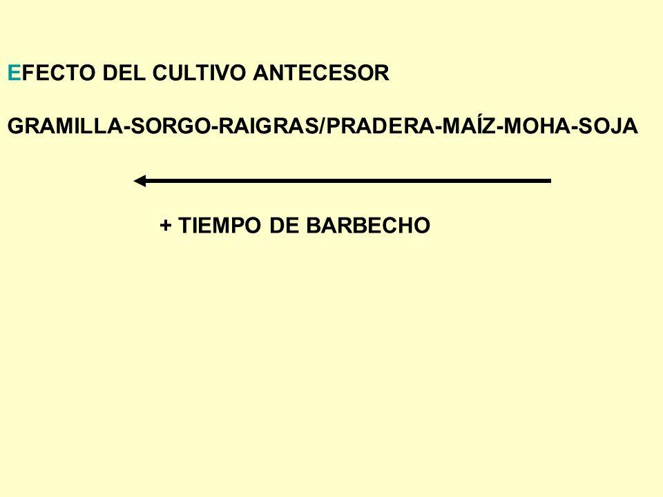 EFECTO DEL CULTIVO ANTECESOR