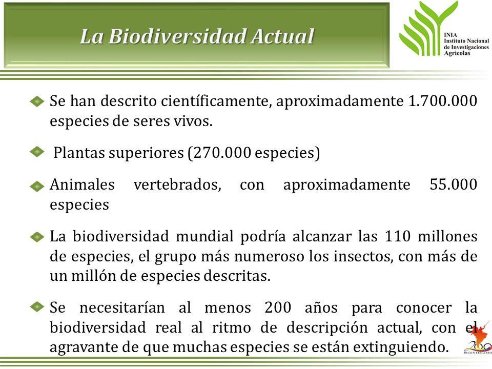 La Biodiversidad Actual