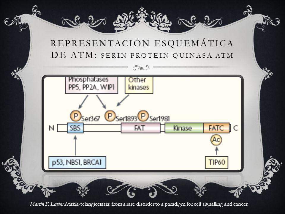 REPRESENTACIÓN ESQUEMÁTICA DE ATM: Serin protein quinasa atm