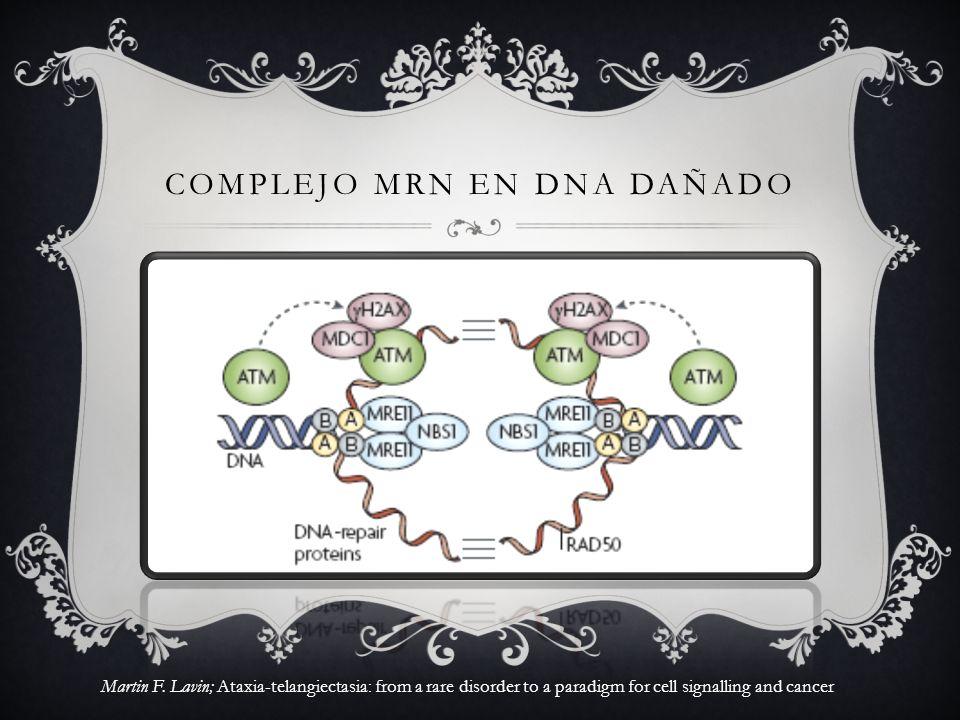 COMPLEJO MRN EN DNA DAÑADO