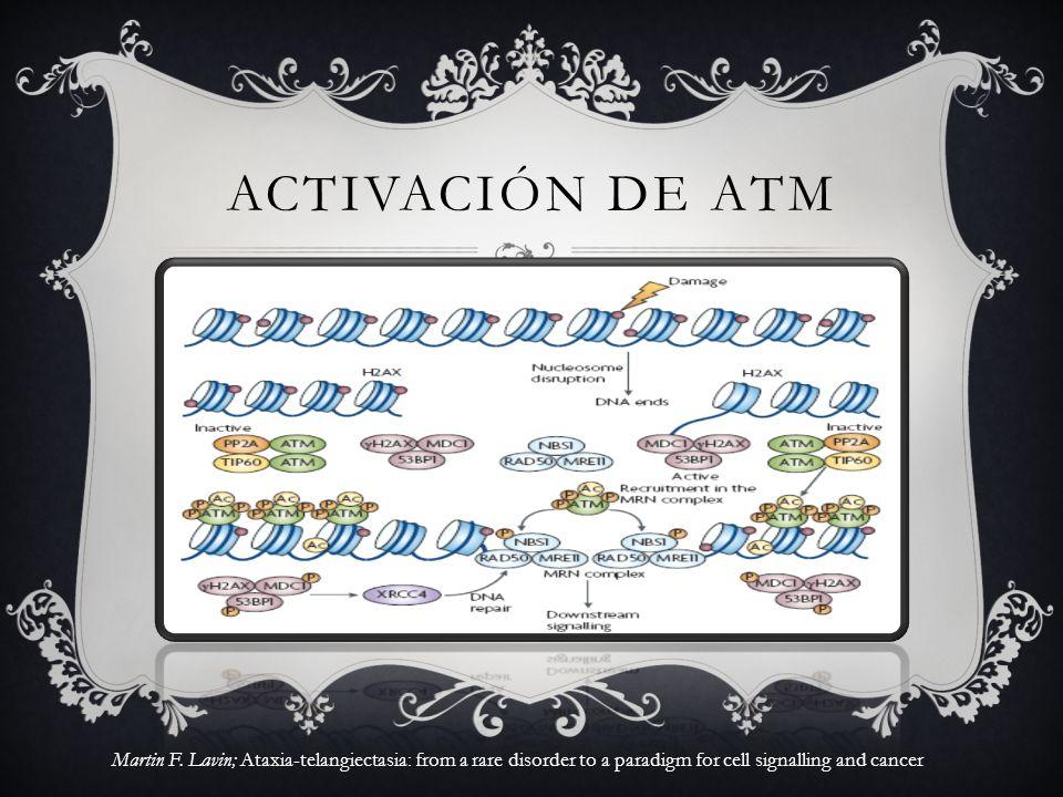ACTIVACIÓN DE ATM Figura 1 | la activación de la ATM. es un.