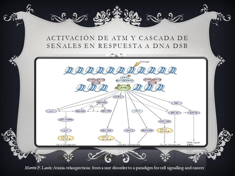 ACTIVACIÓN DE ATM Y CASCADA DE SEÑALES EN RESPUESTA A DNA DSB