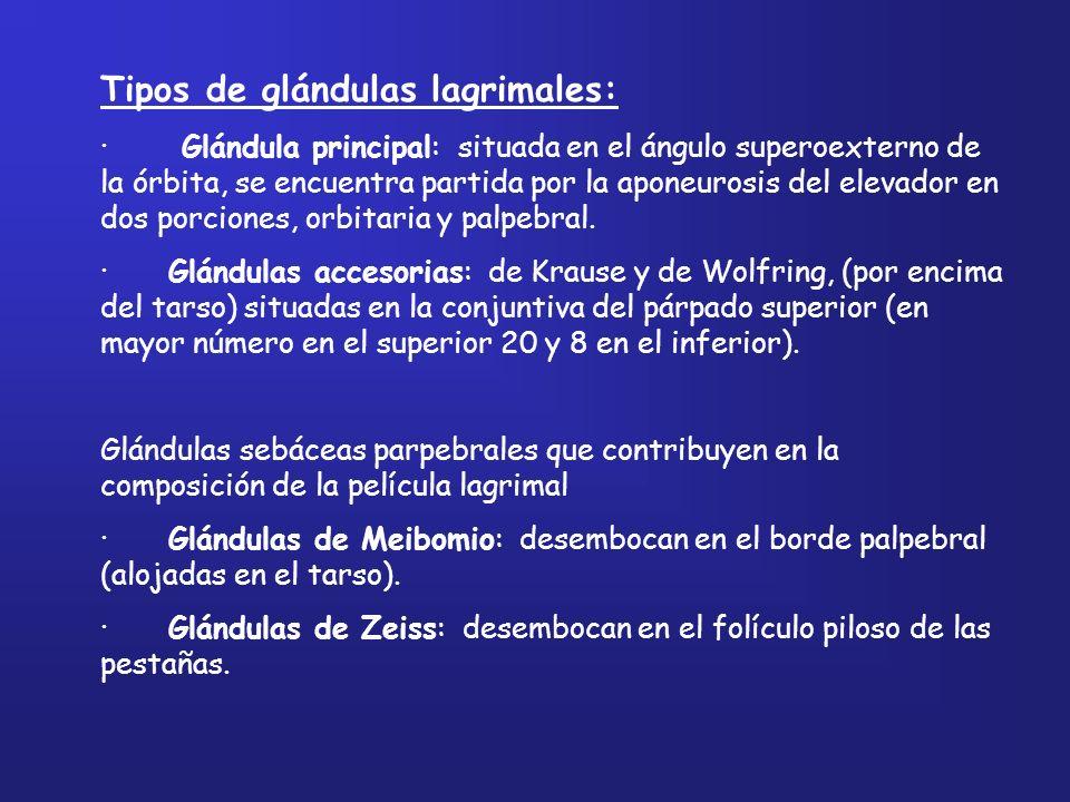 Tipos de glándulas lagrimales: