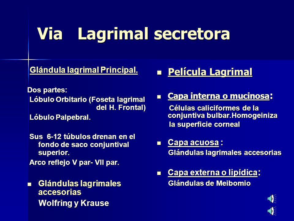 Via Lagrimal secretora