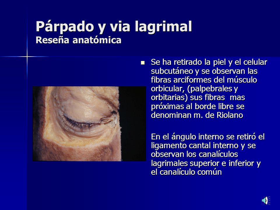 Párpado y via lagrimal Reseña anatómica