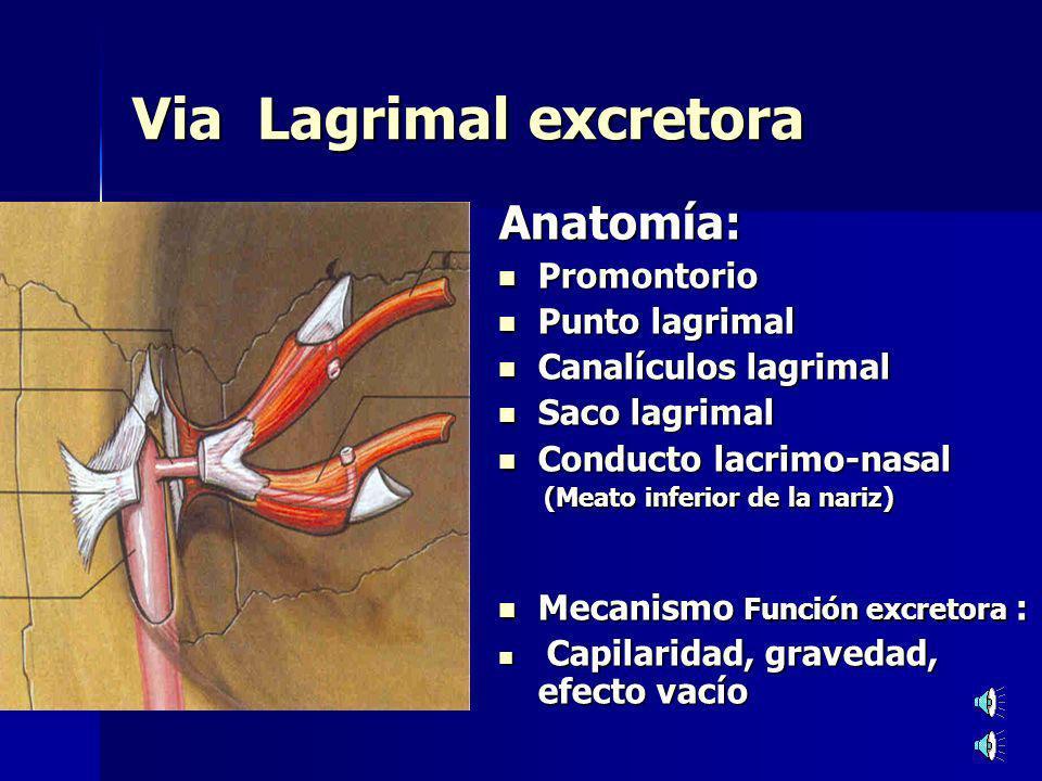 Via Lagrimal excretora