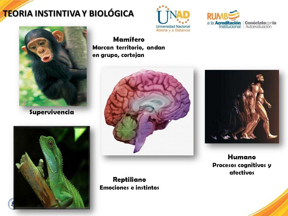 Procesos cognitivos y afectivos