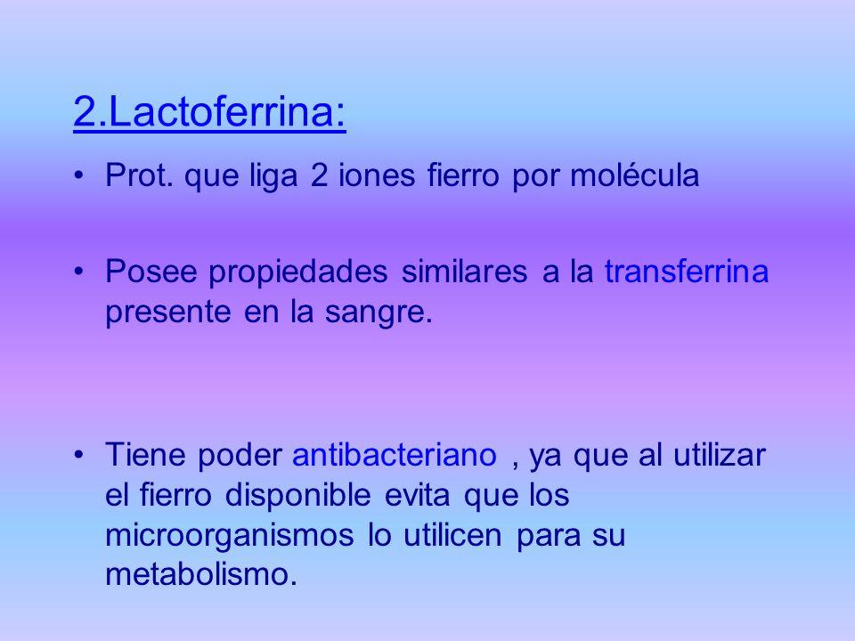 2.Lactoferrina: Prot. que liga 2 iones fierro por molécula