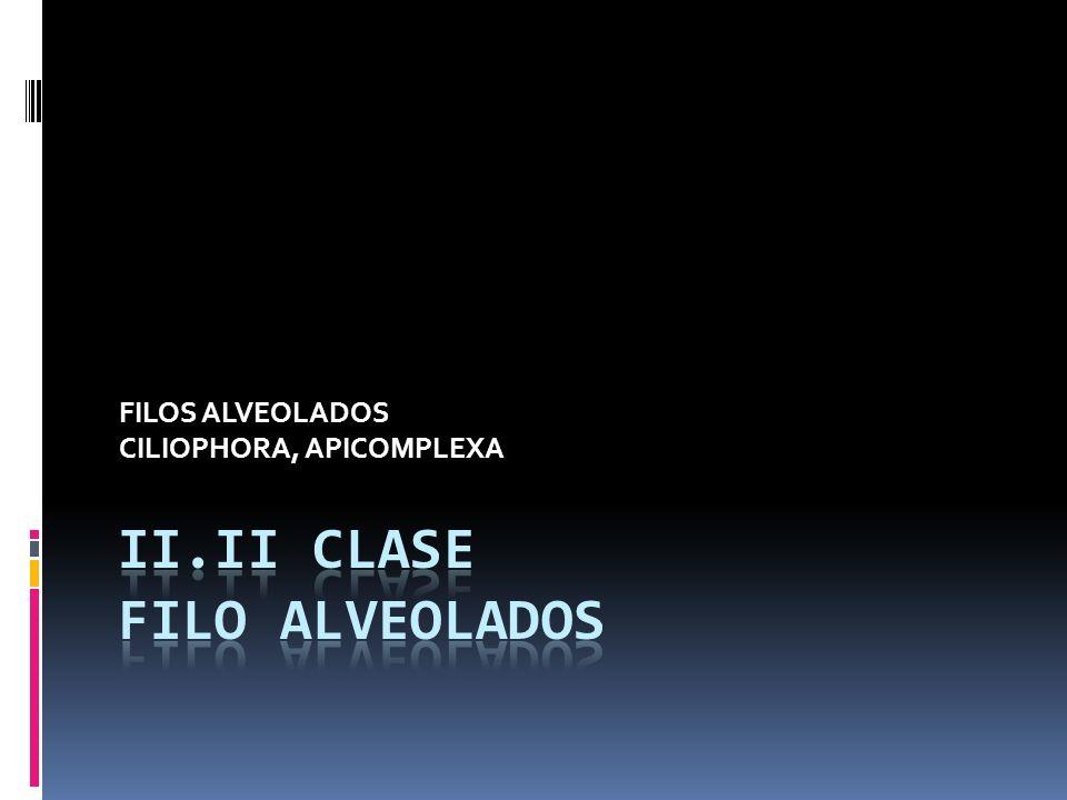 II.ii CLASE Filo Alveolados