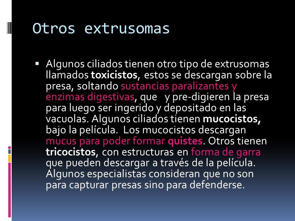 Otros extrusomas